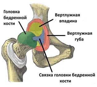 почему болит в тазобедренном суставе полезный