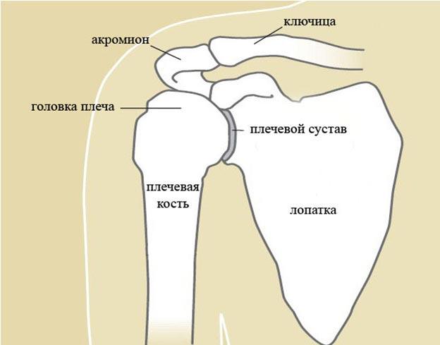 Боли в суставе плеча как лечить бандаж локтевой сустав киев